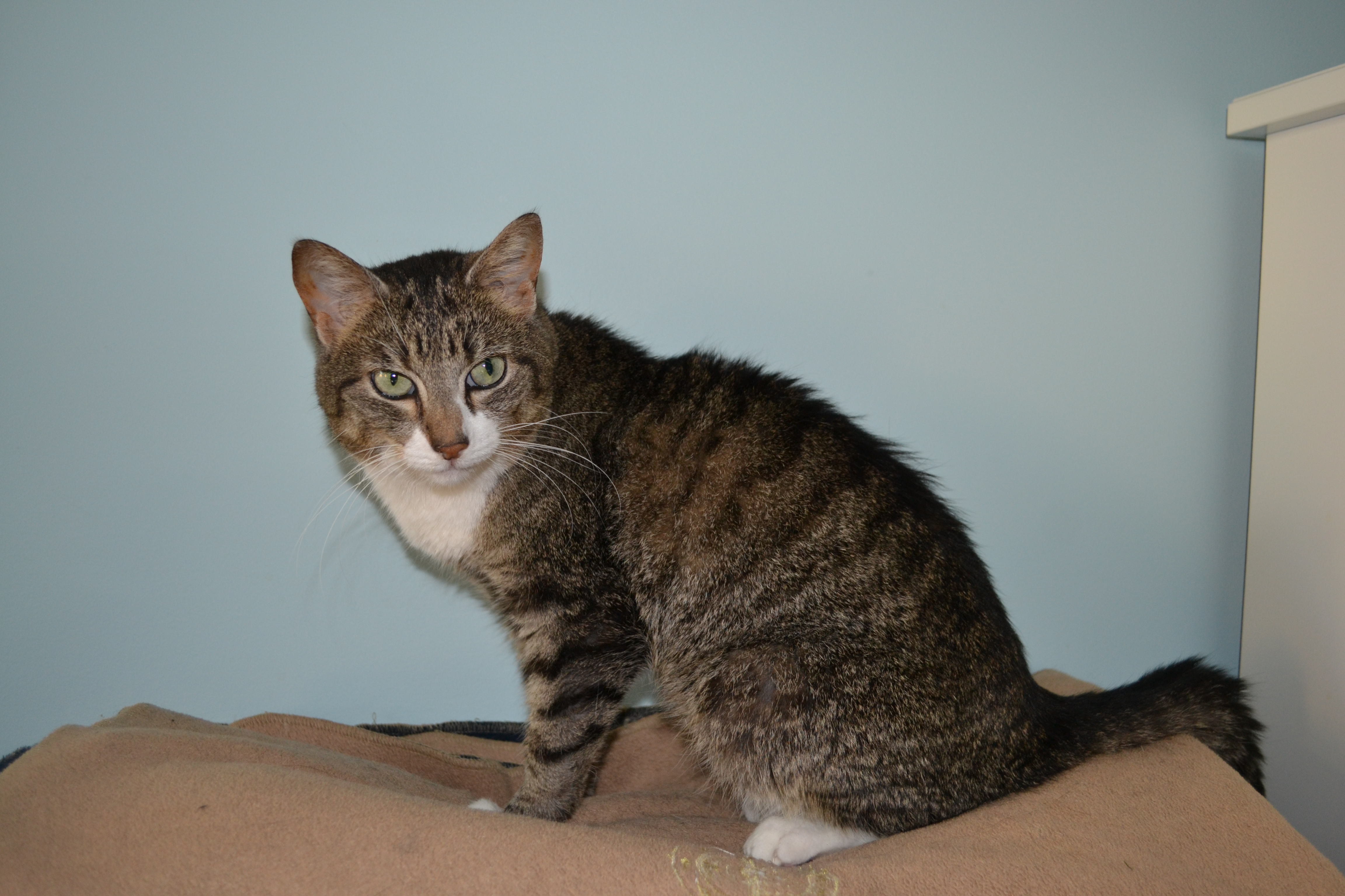 504761ed634f9 Kanga is a very sweet kitty but she has been a bit of a snuffler all her  life – her snorting and noisy breathing had however progressed to where it  was ...